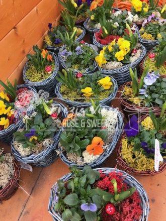 Növánytál - Virágküldés