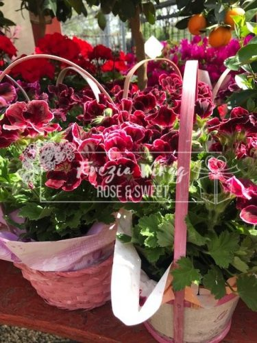 Frézia Virág