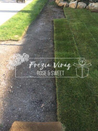 Frézia Virg - Gyepszőnyeg telepítés